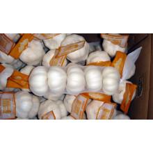 Exportação de boa qualidade Alho branco puro