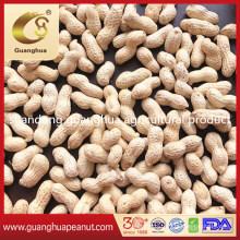 New Crop Raw Peanut in Shell Seaflower Luhua Red Skin Europeanut Standard