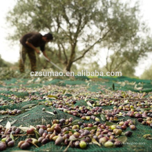 Quality manufacture olive trees collect netting