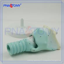 PNT-0442 cartilages larynx expansion anatomie modèle anatomie plastique modèle