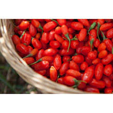 Goji Berry 2014new Crop (180-500grains/50g)