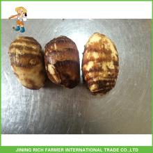 Taro fresco de Shandong