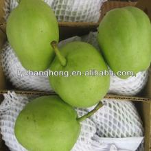 Свежий созревающий поставщик груш в Китае