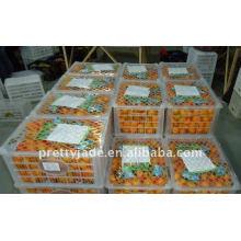 2014 nuevo cultivo Mandarín / naranja fresco del bebé