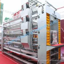 H type batterie couche galvanisée chaude cage de poulet avec système d'alimentation
