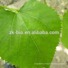100% Natural Mulberry Leaf Extract Deoxynojirimycin