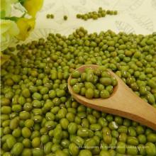 2012 nova colheita pequeno feijão verde mung, origem de Hebei