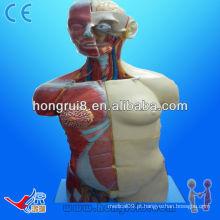 (20 partes) Anatomia humana Anatomia Dual Sexo feminino e masculino Torso 85cm