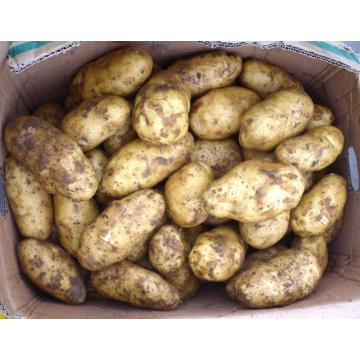 Shamba za Fresh Fresh For Export With Price Low