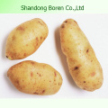 Supply You The High Quality Potato