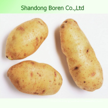 2015 Organic Fresh Potato/Potato Plant Base
