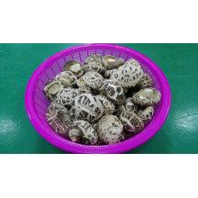 Fournisseur de légumes de nourriture séchée Planteur de champignons Shiitake de fleur blanche