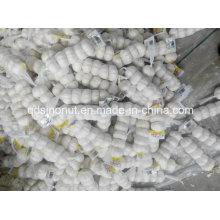 Ajo blanco puro 5p / 200g bolsa de malla