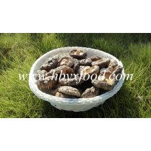 Cogumelo Shiitake Seco (Tampão Suave)