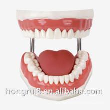 Учебная модель медицинского стоматологического ухода