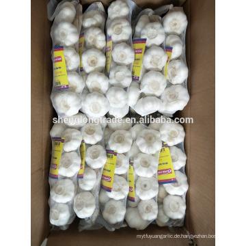 Braid reiner weißer Knoblauch 500g * 20 / Karton China Jinxiang frischer Knoblauch