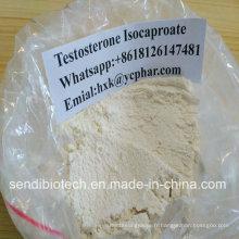 Test / stéroïde cru anabolique de cycle de CAS 15262-86-9 de poudre d'Isocaproate de testostérone