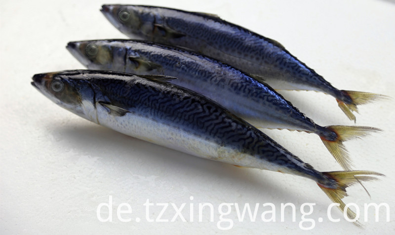 Mackerel Frozen Fish Whole Round