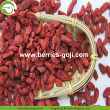 Factory Supply Fruits Premium Auténtica Baya de Goji