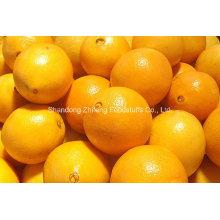 Orange Navel frais chinois en haute qualité