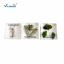 Three Precious Plants Specimen
