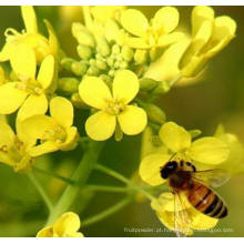 15% Protein Bee Pólen