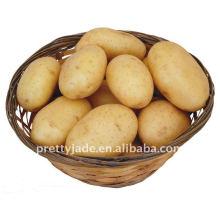 Patata amarilla fresca china