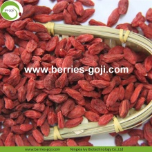 Fábrica al por mayor Nutrición Natural Ningxia Goji Berry
