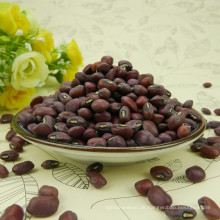 New Crop China machine cleaned polished red Cow peas