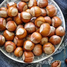 Wholesale Agriculture Products High Quality Hazelnuts