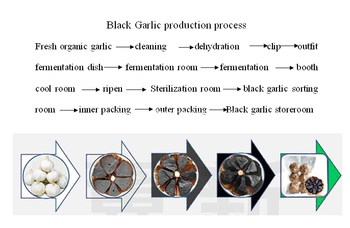 black garlic ferment process