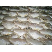Frozen Skinned Fish (veste en cuir) réfrigéré IQF