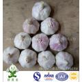 Normal White Garlic New Crop 2016 From Jinxiang of China