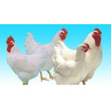 Pollo de engorde aditivo para piensos (enzimas)