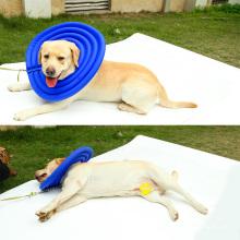 Hot vente chien chat chien de récupération de protection E-collier