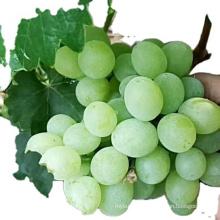 red grape fruit fresh grape yellow grapes