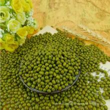 2012 nova safra, pequeno feijão verde mung para brotos, tipo MC