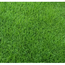 Best bermuda grass seed for sale