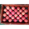 Venta caliente Pink Lady Sweet Apples