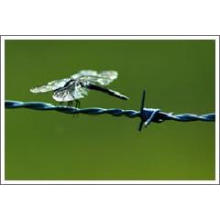 Electro-Galvanized Barbed Wire