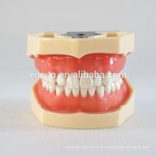 China Medical modelo anatômico Soft Gingiva 28 dentes padrão dental maxilar modelo 13016