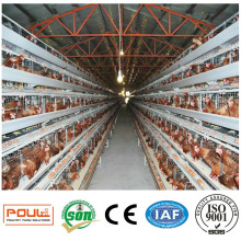 Hot Sale a Type Layer Poultry Battery Cages for Nigeria Chicken Farm