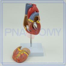 PNT-0400 plastic Heart Anatomy Model