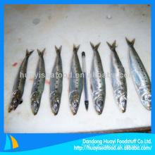 Sardinha fresca sardinha congelada