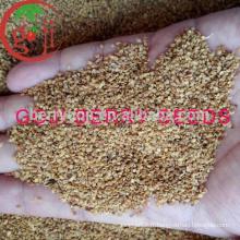 Factory Supply Graines de baies Goji de haute qualité pour les plantes arbre