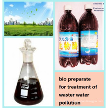 seaweed Bio Agent for Treatment of Waste Water Pollution