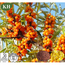 Anti-Aging 100% puro óleo de semente de Buckthorn Sea Omega-6, Omega-3, Omega-9 em Softgel para suplemento nutricional