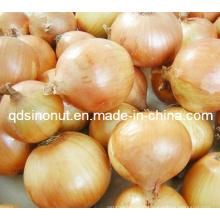 New Crop Fresh Onion