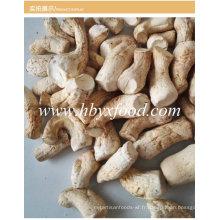 Vente en gros de champignons Shiitake séchés Pied / Tige