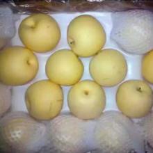 Хэбэй Золотая свежая груша